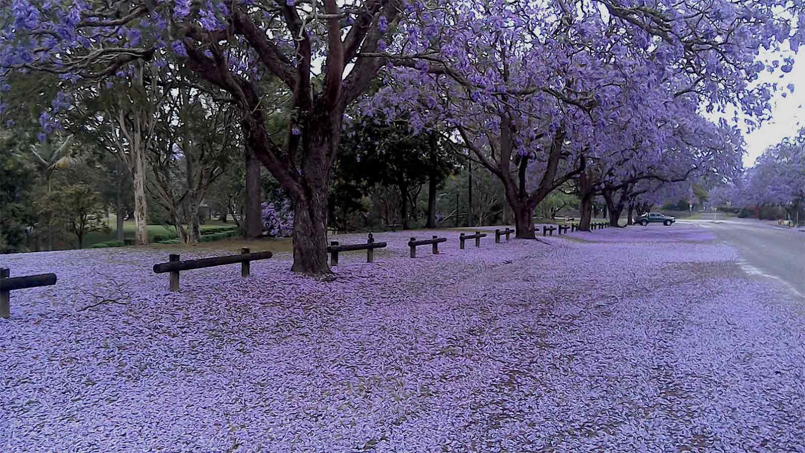 primavera-argentina